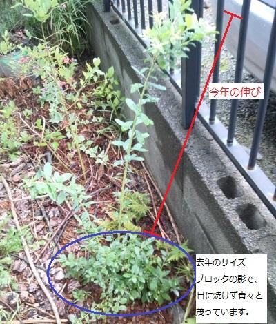 20140815_3.jpg